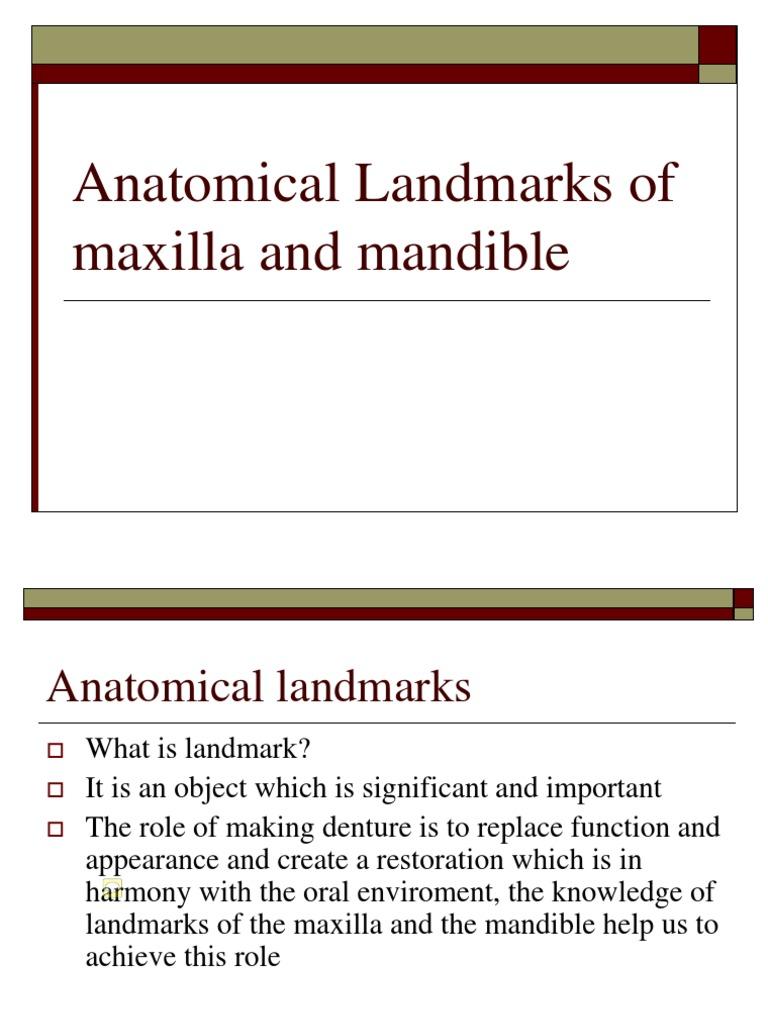 Landmarks For Maxilla And Mandible Tongue Animal Anatomy