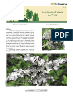 Lichens and Vines on Trees (SP660)