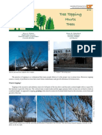 Tree Topping Hurts Trees (SP549)