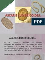 Presentacion Ascaris L.