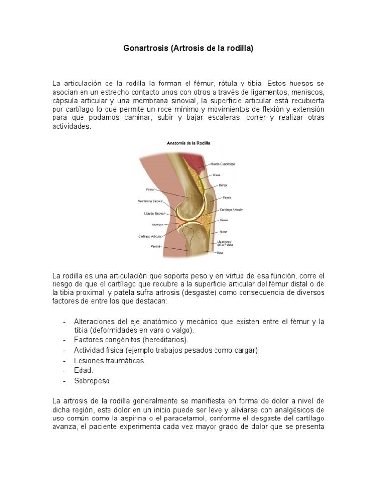 Dorable Anatomía De Escaleras Componente - Imágenes de Anatomía ...