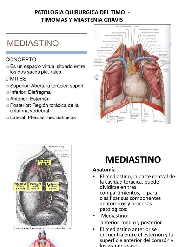 Moderno Anatomía Mediastino Anterior Regalo - Imágenes de Anatomía ...