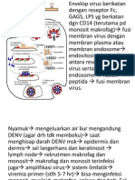 Dbd Pathogenesis