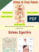 Principais Sistemas Corpo Humano