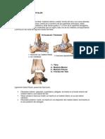 Articulacion Del Tibiotalar