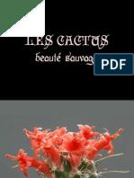 Cactus BeautyInBloom