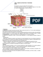 ANATOMÍA Y FISIOLOGÍA DE LA PIEL Y ANEXOS1