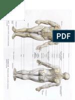 anatomi gambar