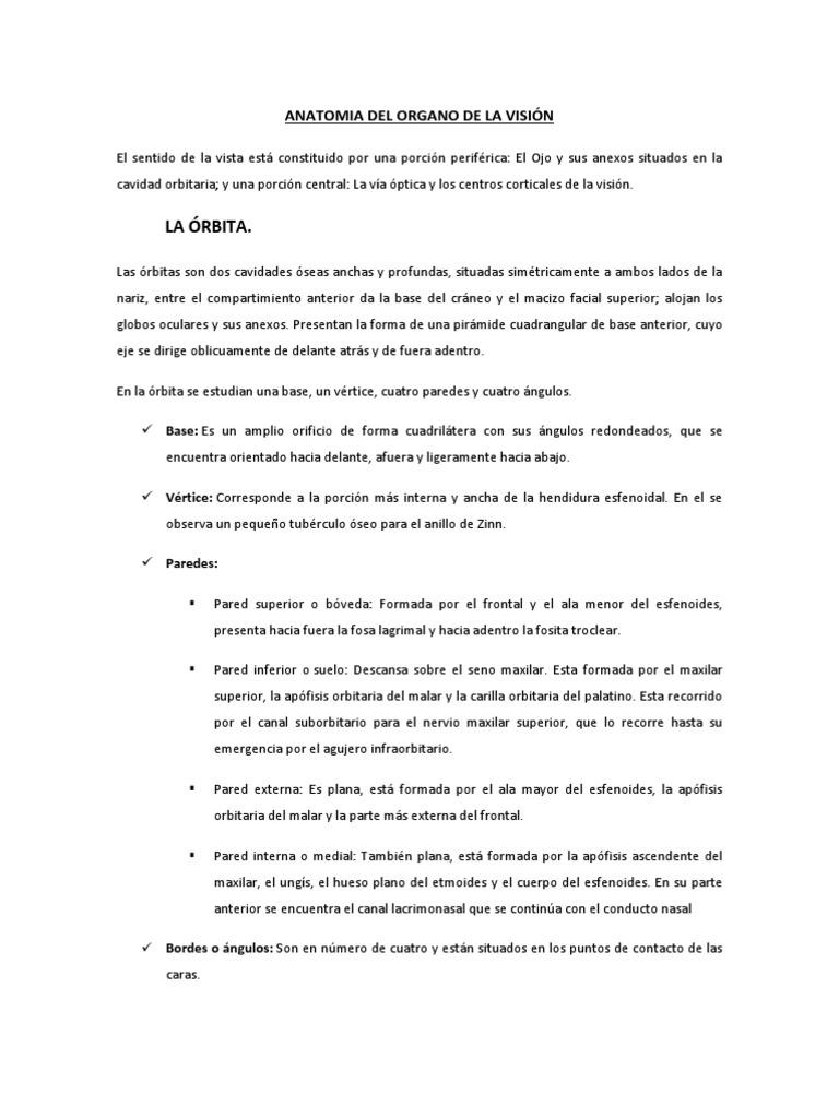 ANATOMIA DEL ORGANO DE LA VISIÓN