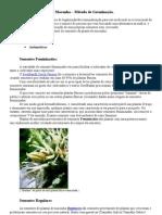 Tipos de Sementes de maconha  Métodos de Germinação