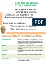 Musculos Del Torax 2