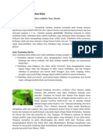 Tanaman Binahong Anredera Cordifolia