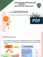 PARAOXONASA 1