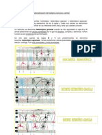12. Sistematización del sistema nervioso central