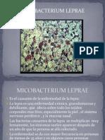 Presentacion Lepra