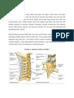 Anatomi Vertebra