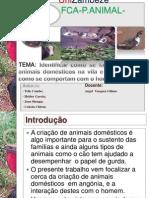 Identificao de especies animais criadas na Angonia (Mocambique) e o maneio efectuado.