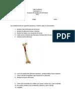 II Evaluación ANATOMIA
