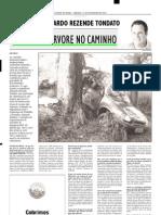 2003.02.01 - TINHA UMA ÁRVORE NO CAMINHO - Estado de Minas