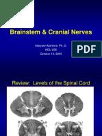 Brain Stem Anatomi