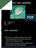 Budidaya Ikan baronang