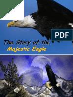 Eagle Rebirth