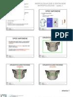 2011 Morfologija 1 Vjezba 11 13 Za PDF