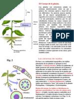 CuerpoPlanta.pdf