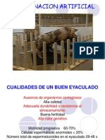 Inseminacion Artificial en Porcinos