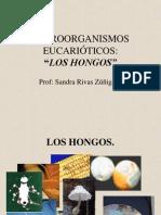 hongos2