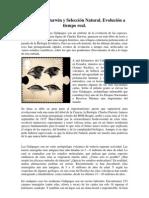 Pinzones de Darwin y Selección Natural.docx