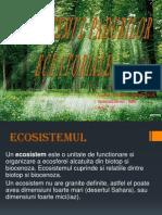 ecosistem padure ecuatoriala