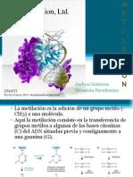 LAHIPERMETILACIÓN DEL GEN p16INK4a (p16) PUEDE