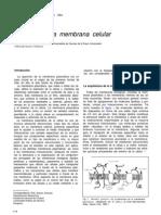 Biologia de La Membrana Celular