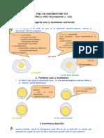 analiza oului