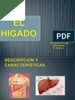 HIGADO (2) (2)