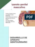GENITALES MASCULINOS.pptx