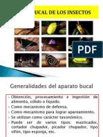 APARATOS_BUCALES