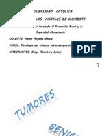 Investigacion Formativa 3 Patologia