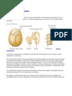 Huesos y Articulaciones Humanas