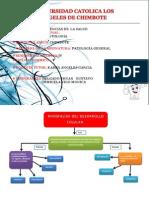 Patologia Mapas Copy