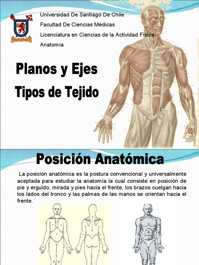 Hermosa Cuál Es La Anatomía Ciencia Médica Bandera - Anatomía de Las ...