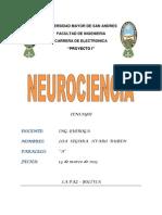 Neurociencia (Ensayo)