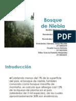 Bosque de Niebla (1)