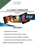 Clase 2- Embriologia