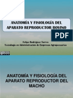 anatomayfesiologiaaparatoreproductorbovino-120103155657-phpapp02