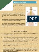 Clase 3 Medula Espinal