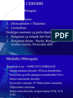 3bmyelencephalon
