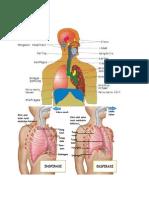 Alat pernapasan manusia terdiri dari hidung.docx