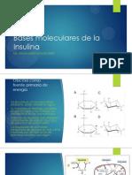 Bases Moleculares de La Insulina